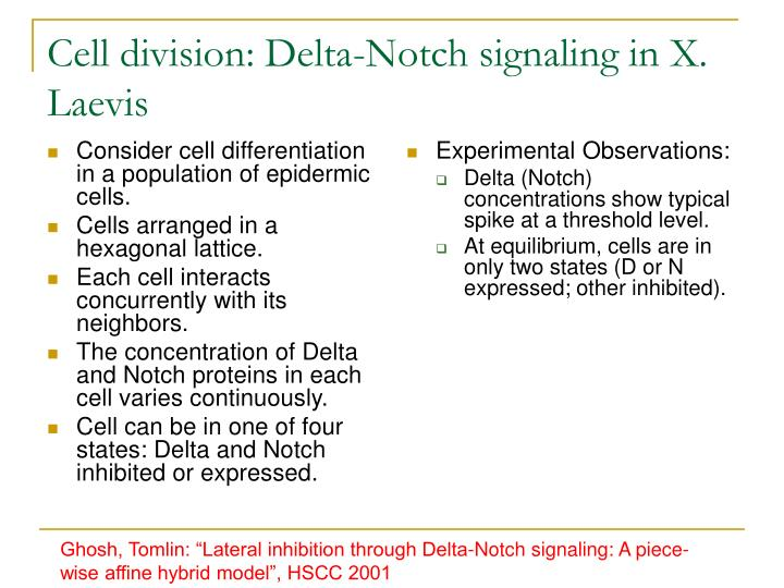 Consider cell differentiation in a population of epidermic cells.