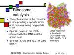 ribosomal catalysis