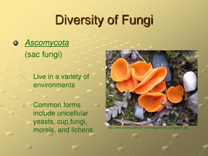 Diversity of Fungi