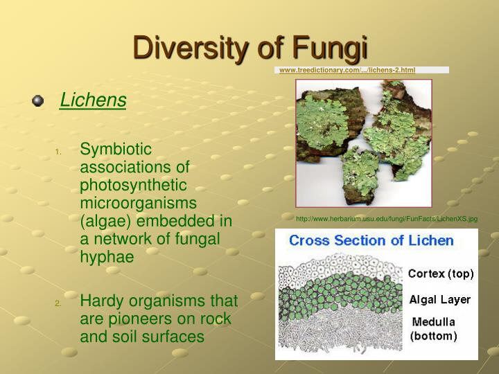 www.treedictionary.com/.../lichens-2.html