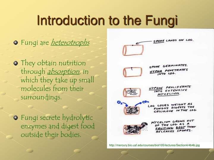 Introduction to the fungi1