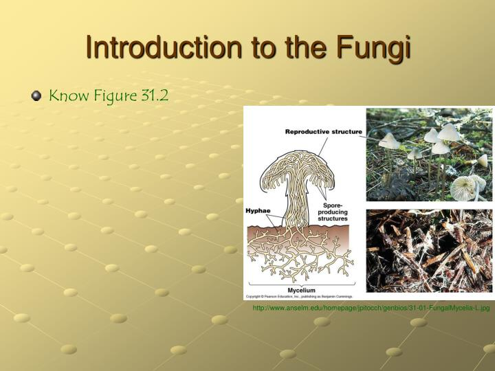 Introduction to the Fungi