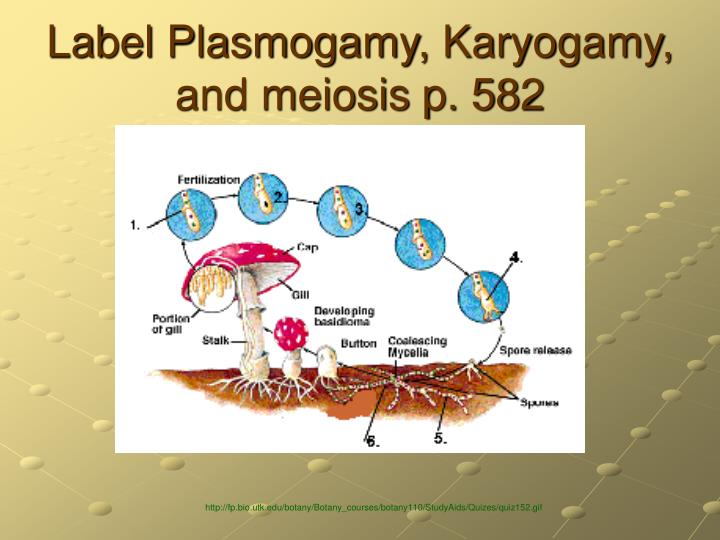 Label Plasmogamy, Karyogamy, and meiosis p. 582