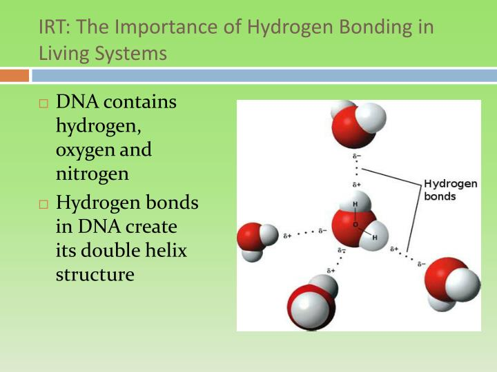 the importance of hydrogen bong in biology Hydrogen bonds the importance of hydrogen bonds in living organisms why do they form cellulose cellulose is essential in plant cells, it forms the cell wall making the structure rigid and prevents osmotic lysis.