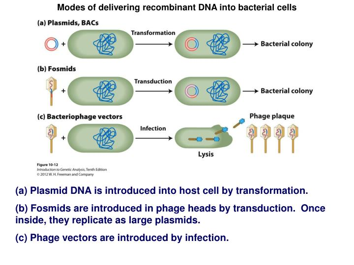 Modes of delivering recombinant DNA into bacterial cells