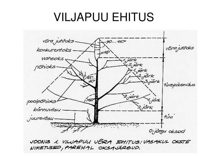 VILJAPUU EHITUS