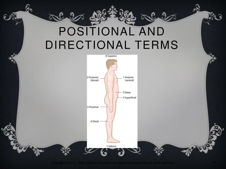 Positional and Directional