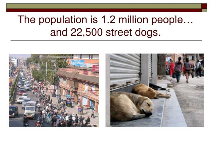 The population is 1 2 million people and 22 500 street dogs