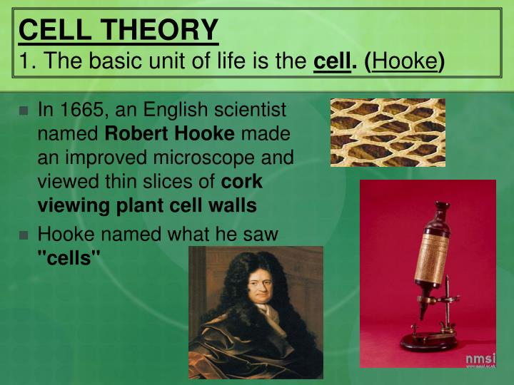 Cell theory 1 the basic unit of life is the cell hooke