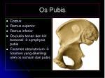 PPT - ANATOMI PELVIS PowerPoint Presentation - ID:5090490