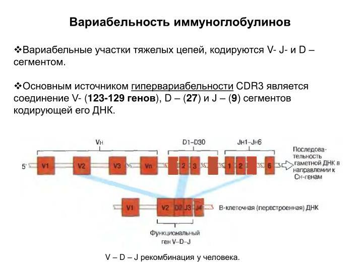 Вариабельность иммуноглобулинов