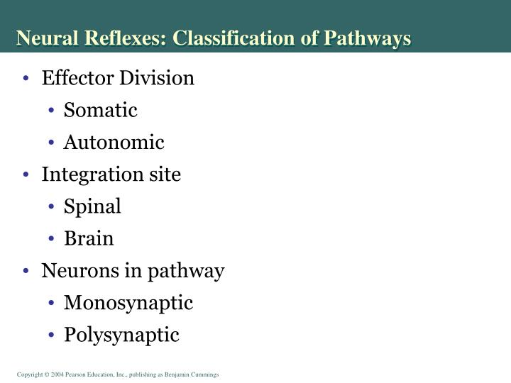 Neural Reflexes: Classification of Pathways