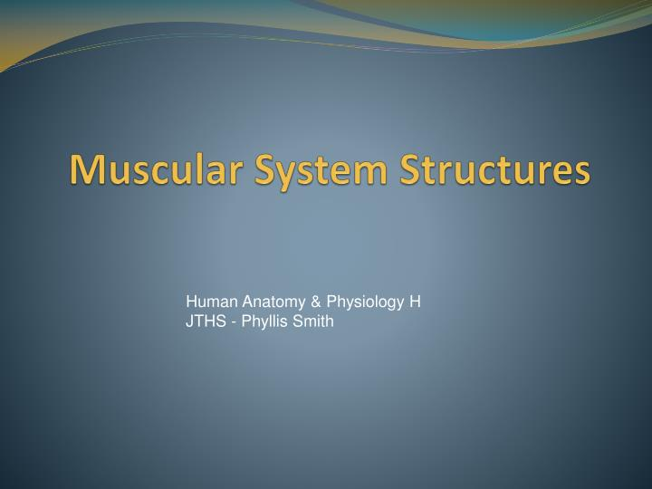 Muscular system structures