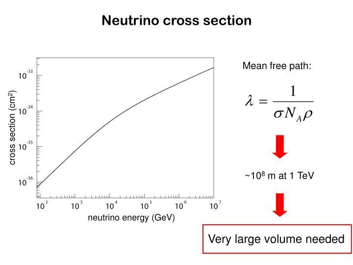 Neutrino cross section