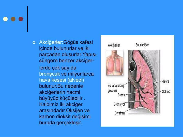 Akciğerler: