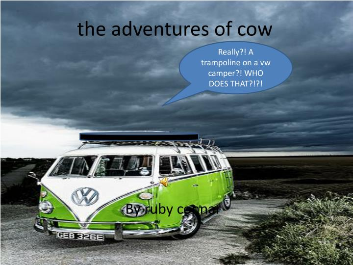 the adventures of cow n.