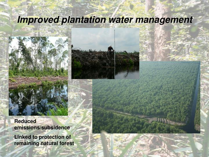 Improved plantation water management