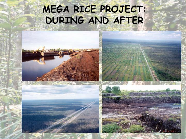 MEGA RICE PROJECT: