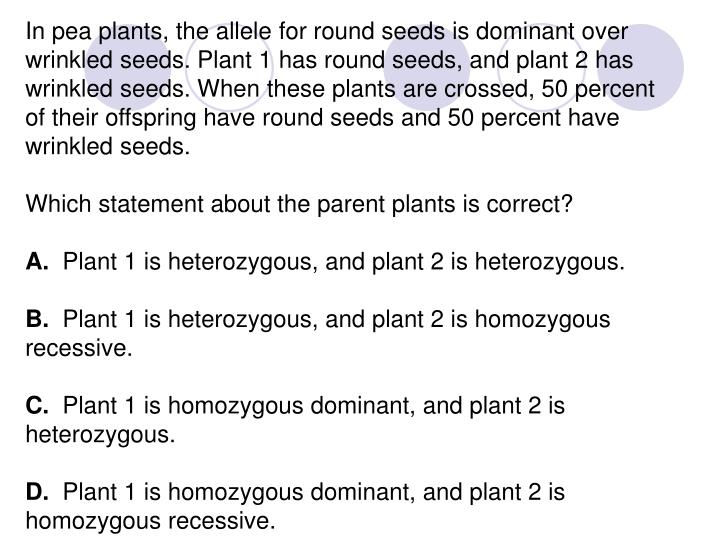 In pea plants, the allele for round seeds is dominant over wrinkled seeds. Plant 1 has round seeds, and plant 2 has wrinkled seeds. When these plants are crossed, 50 percent