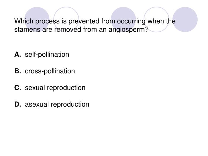 Which process is prevented from occurring when the stamens are removed from an angiosperm?