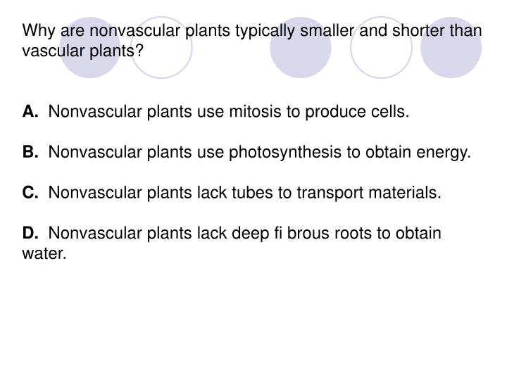 Why are nonvascular plants typically smaller and shorter than vascular plants?