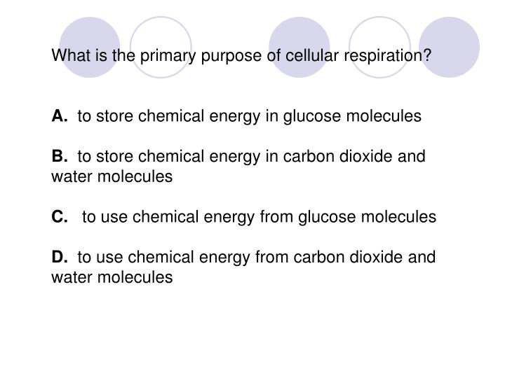 What is the primary purpose of cellular respiration?
