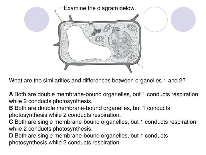 Examine the diagram below