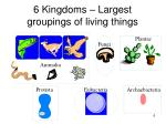 6 kingdoms largest groupings of living things