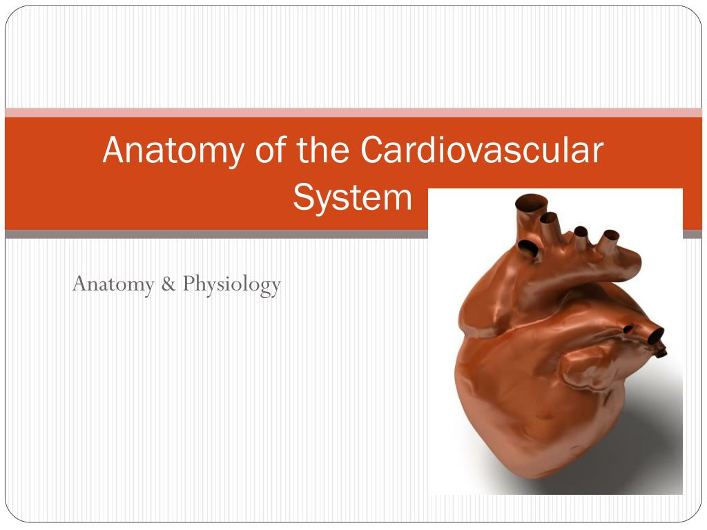Ppt Anatomy Of The Cardiovascular System Powerpoint Presentation