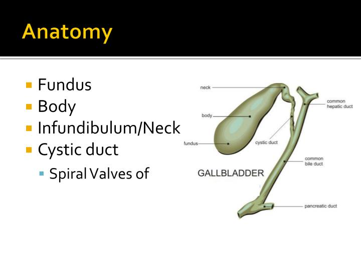 Ppt The Gallbladder Gallstones And Beyond Powerpoint