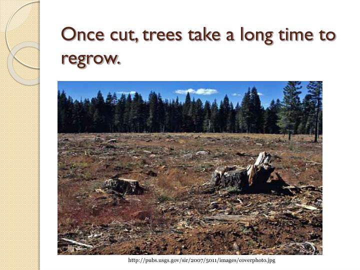 Once cut, trees take a long time to regrow.