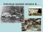 individual skeletal remains
