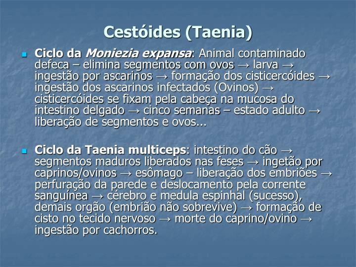 Cestóides (Taenia)