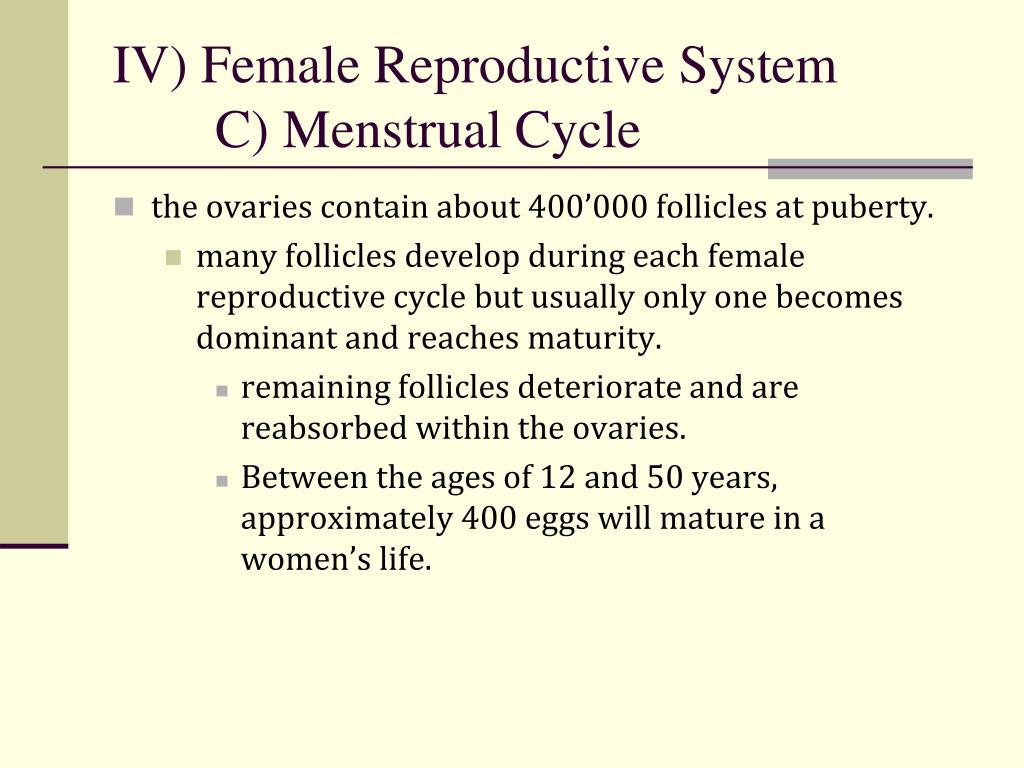 Ppt Iv Female Reproductive System C Menstrual Cycle Powerpoint