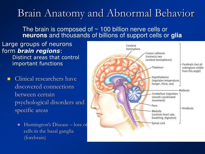 Brain Anatomy and Abnormal Behavior
