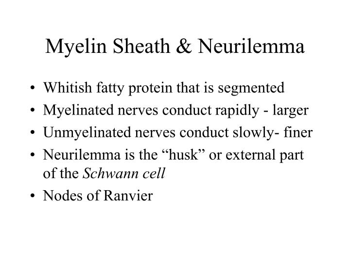 Myelin Sheath & Neurilemma