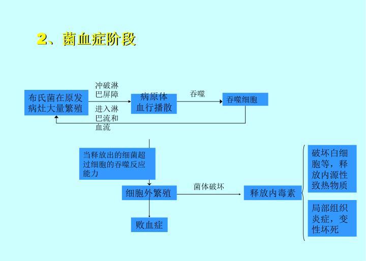 2、菌血症阶段