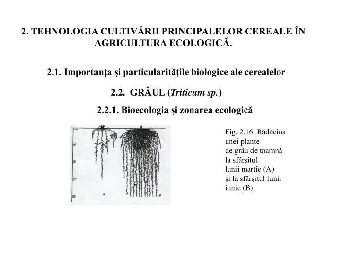 2. TEHNOLOGIA CULTIVĂRII PRINCIPALELOR CEREALE ÎN AGRICULTURA ECOLOGICĂ.