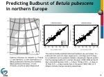 predicting budburst of betula pubescens in northern europe