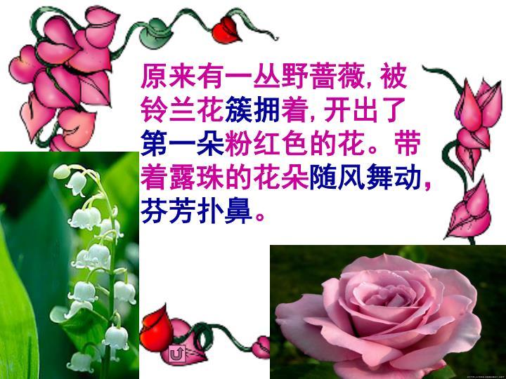 原来有一丛野蔷薇