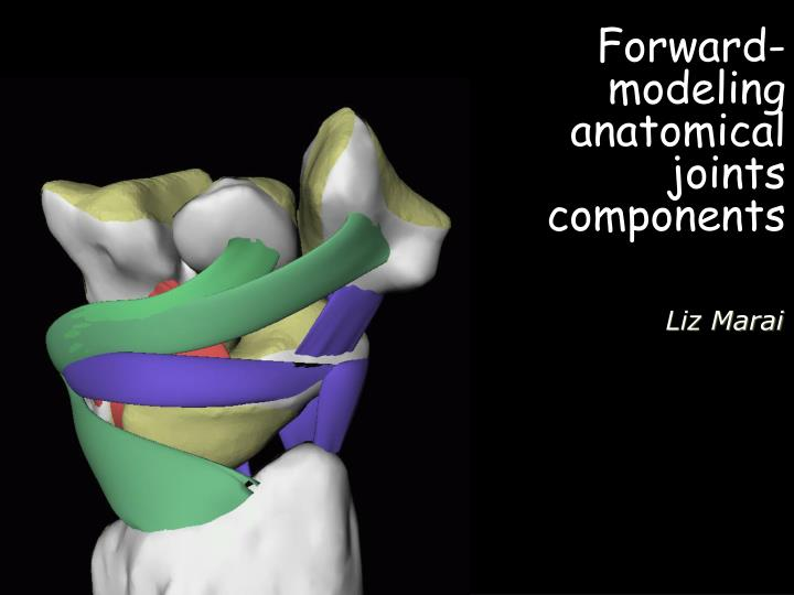 Forward-modeling anatomical joints components