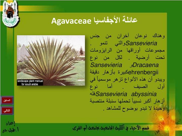 Agavaceae1