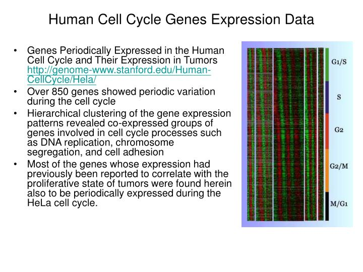 Human Cell Cycle Genes Expression Data