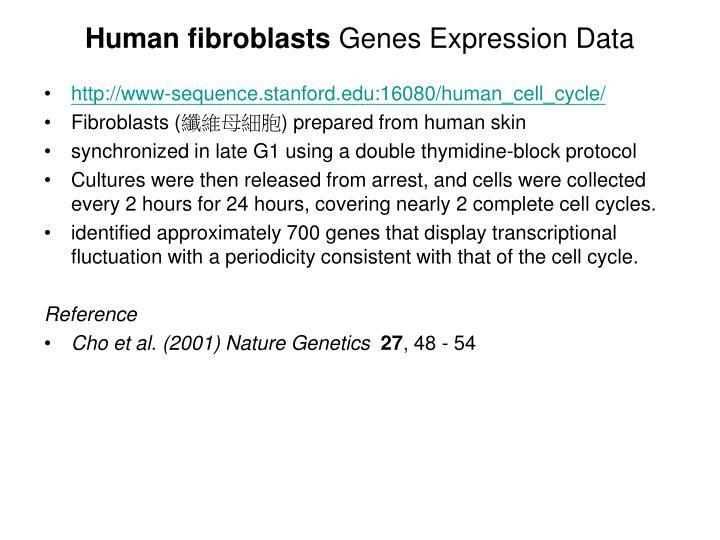 Human fibroblasts