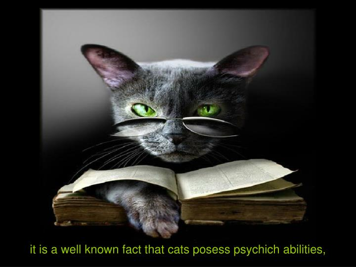 It is a well known fact that cats posess psychich abilities,