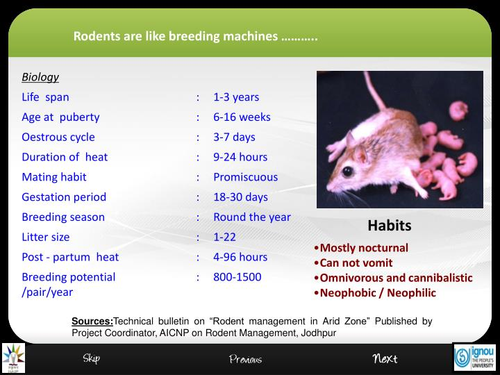 Rodents are like breeding machines ………..