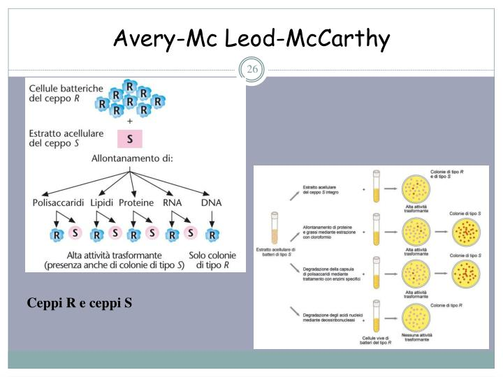 Avery-Mc Leod-McCarthy