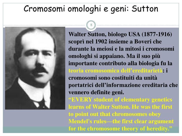 Cromosomi omologhi e geni: Sutton