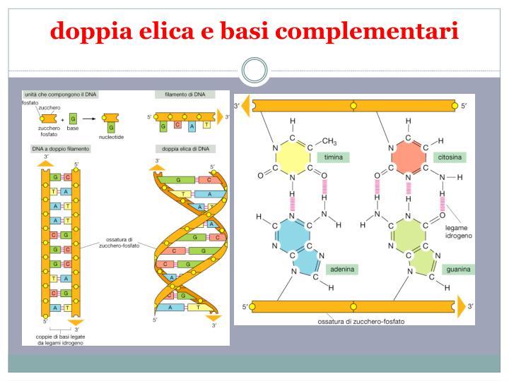 doppia elica e basi complementari