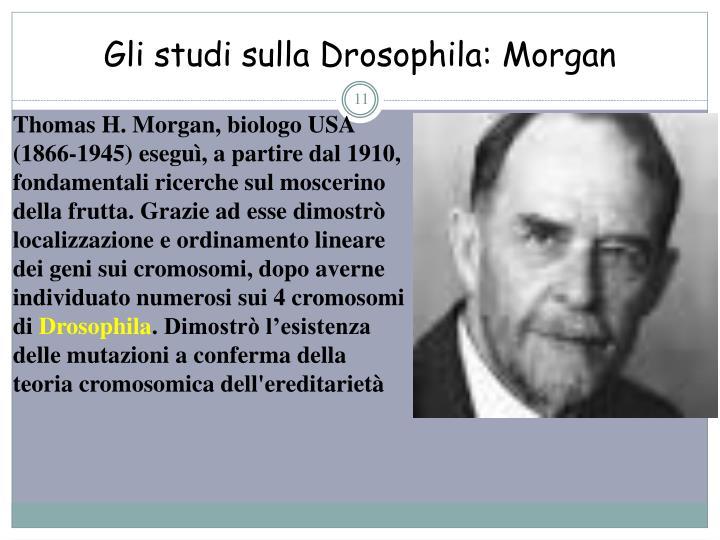 Gli studi sulla Drosophila: Morgan